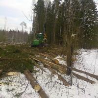 Лыжная трасса оказалась под завалами вырубленного леса.