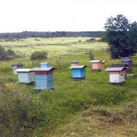 Пчелиная пасека Поповых.